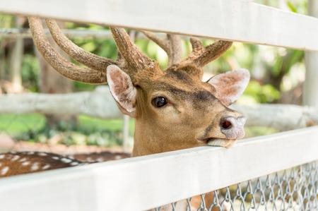 Deer in captivity in zoos Stock Photo