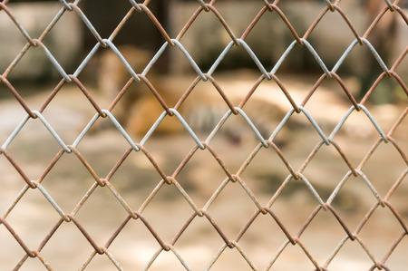 tigresa: jaula con el tigre en el zoológico