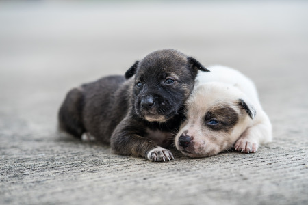 stray puppies lying on the street