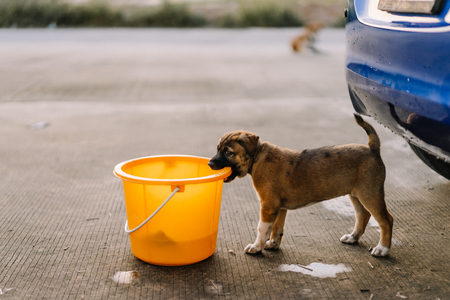 brown pupply are biting the tank of car wash