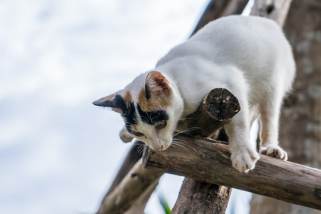 kitten sits on a wood branch in the garden