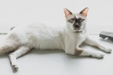 The cat is lay, with eye focus. Stockfoto