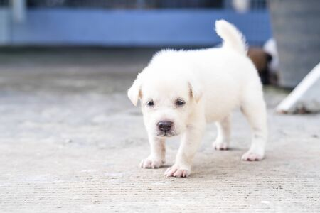 lovely Puppy playing outdoor