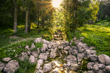 rivulet: Alpine forest creek  Landscape with the morning sun glowing above the mountain forest and its clear water creek. Image taken on Jenner mountain, Bavaria, Germany