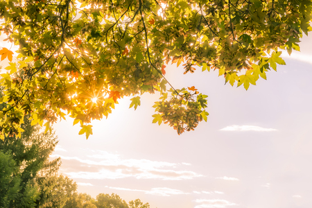 Autumn leaves and sun against sky - Lovely autumn image with warm sun rays enlightening   branches of trees loaded with colorful leaves. Great as background or frame for fall concepts.