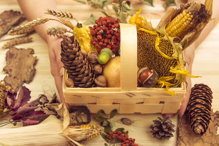 forestry: Basket with fall ingredients held in womans hands - Autumn products such as corn, sunflower, apple, pumpkins in a wooden basket decorated with other forestry fall elements.
