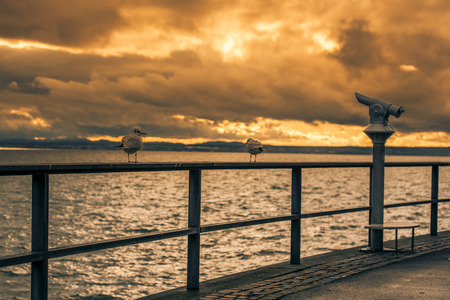 friedrichshafen: View with two seagulls on a metal railing and the tourists binocular on the boardwalk from the lake Bodensee, in Friedrichshafen city, Germany