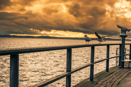 friedrichshafen: Sunset over the lake Bodensee and the two seagulls on a metal railing near the tourists binocular in Friedrichshafen town, Germany.
