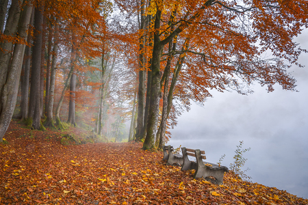 melancholy: Wooden benches on the shore of the Alpsee lake, surrounded by mist and forest, in autumnal colors, in Fussen, Germany. Stock Photo