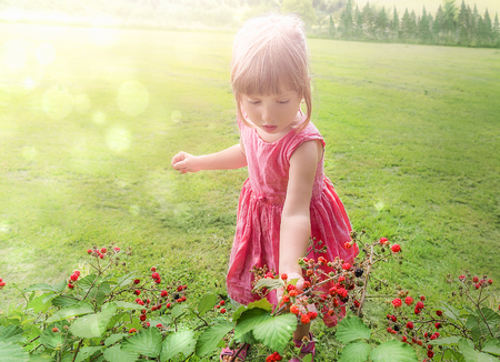 Little girl in a pink dress picking delicious raspberry from a bush, while the sun shines over her. Reklamní fotografie