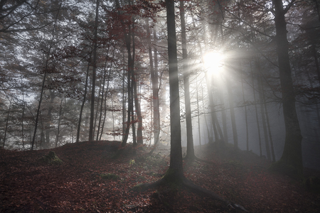 shadowed: Fall image with a shadowed forest, in autumn colors, enlightened by a few sun rays that pierced the morning mist, in Fussen, Germany. Stock Photo