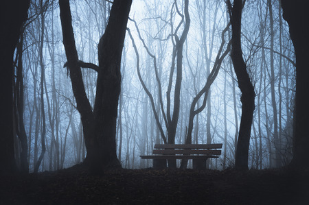 Cold fall landscape with a wooden bench in a forest, with silhouettes of leafless trees and dense fog. Haunted foggy forest. Dark forest with mist. Stock Photo