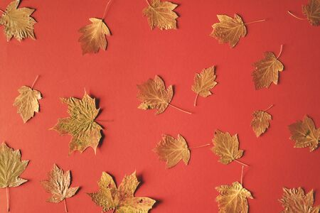 Fall nature concept with dried autumn leaves on a red paper background. Flat lay of a fall composition. Pattern of different types of fallen leaves