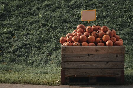 Pumpkins market with a pile of squashes in a wooden crate. Small orange colored pumpkins for sale. Seasonal products Stock Photo