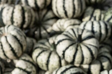 White squashes with green lines. Pumpkins pile, background made with blur from camera Reklamní fotografie