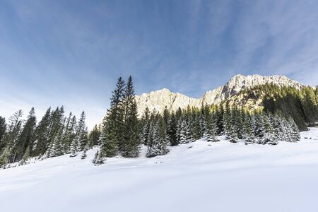 Winter scenery in the Austrian Alps with clean white snow and snowy forest. Snow-covered trees and rocky mountains under a blue sky
