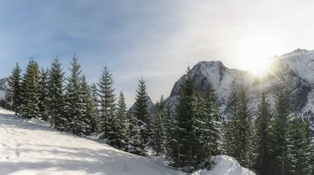 Sunny winter landscape with snow-capped mountain peaks, snow fir trees, and snowdrift, under sun rays, in Ehrwald, Austria, on a cold December day.