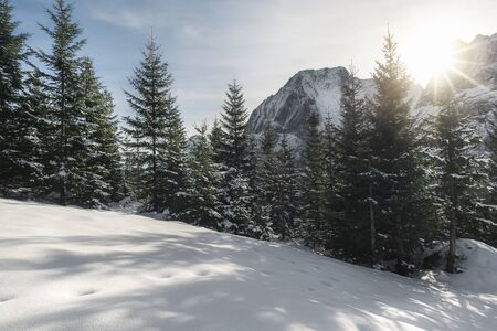 Sunshine over snowy nature. Winter sunny day in the snow-capped mountain peaks and snowy trees. Dreamy Christmas travel location. Winter scenery.