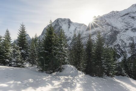 Snowy fir trees and snow-capped mountain peaks in Ehrwald, Austria. Winter landscape with snow and sun rays, December. Christmas vacation destination 版權商用圖片