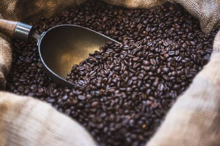 Close-up of freshly roasted Arabica coffee beans with an aged scoop in a jute bag. Coffee beans in open sack.  Roasted black coffee beans background.