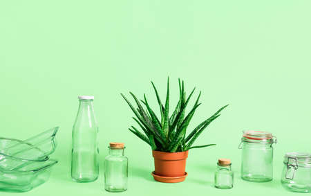 Plastic-free household objects and green plant isolated on green background. Sustainability concept. Reusable glass containers. Sustainable lifestyle