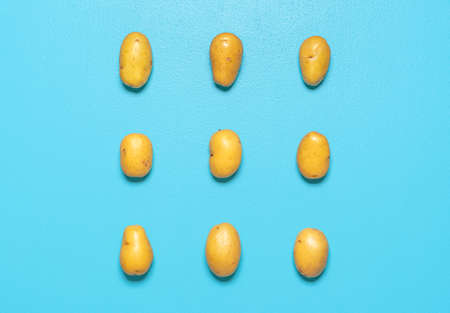Above view with several yellow potatoes isolated on a blue background. Potatoes aligned symmetrically on a blue table.