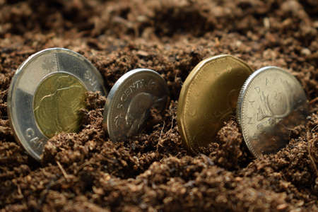 Canadian dollars coins sown in the ground