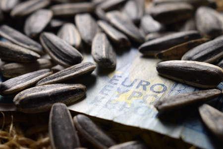 Close up on sunflower seeds