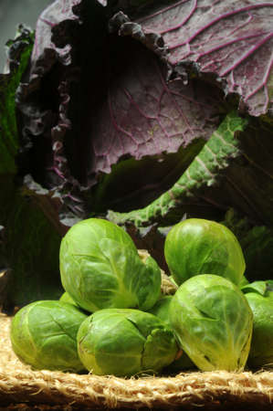 Close up on Brussels sprouts and cabbage on the background. Standard-Bild