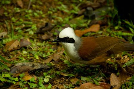 tame: Bird Stock Photo