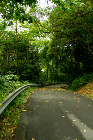 fallin: Road