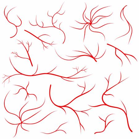Eye veins. Human eye vessels, blood arteries set. Medical eyeball vein arteries system.