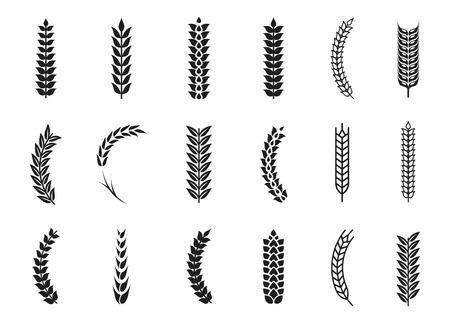 Wektor pszenicy uszy ikony. Symbole ziaren owsa i pszenicy