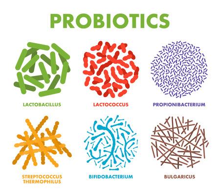 Probiotica. Goede bacteriën en micro-organismen voor de menselijke gezondheid. Microscopische probiotica, goede bacteriële flora. Vector Vector Illustratie