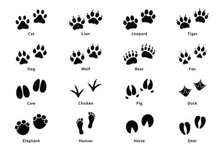 Tierspuren, Pfotenabdrücke. Set von verschiedenen Tier- und Vogelabdrücken und -spuren. Katze, Löwe, Tiger, Bär, Hund, Kuh, Schwein, Huhn, Elefant, Pferd usw. Vektor
