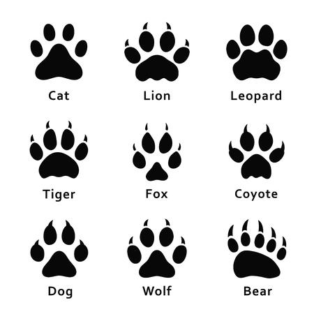 Tierspuren, Pfotenabdrücke. Set von verschiedenen Tieren und Raubtieren Fußabdrücke und Spuren. Katze, Löwe, Leopard, Tiger, Fuchs, Wolf, Kojote, Hund, Bär. Vektor Vektorgrafik
