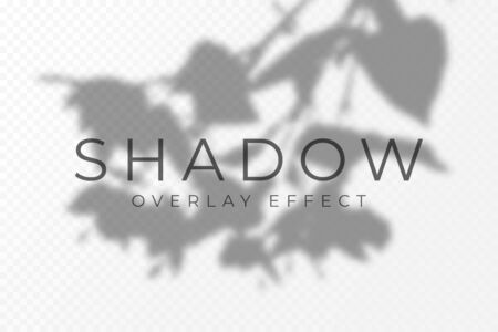 Shadow overlay effect. Transparent soft light and shadows from plant branches, leaves and foliage. Mockup of transparent shadow overlay effect and natural lightning. Vector