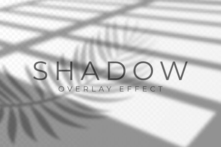 Shadow overlay effect. Vector shadow and light overlay effect, natural lighting scene. Mockup of transparent shadow from windows and palm leaves. Realistic transparent light refraction