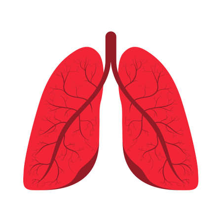 Human lungs. Human respiratory system, internal organ. Human lungs icon, symbol in cartoon style. Healthcare, medicine and anatomy concept. Vector