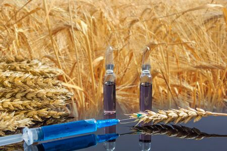 A syringe with a chemical substance and ampoules lie on a table with ears of wheat. Wheat and grain tests for GMO. Genetically modified product. The harm of herbicides and pesticides on the human body Reklamní fotografie