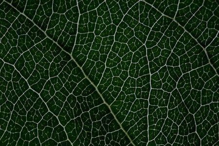 Leaf macro, low exposure, dark green details