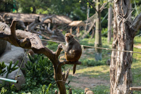A little monkey sits on a tree in a Safari Park