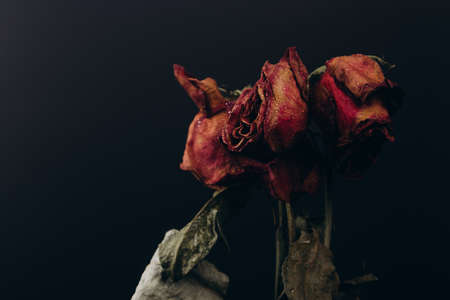 Bouquet of red dry withered roses on a black background. Floral composition