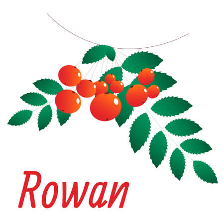 Rowan branch with orange berries and green leaves. All elements are isolated