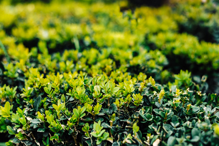 textured wall: green fresh bushes grow on the street all year round