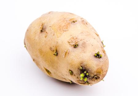 toxin: germinated potato