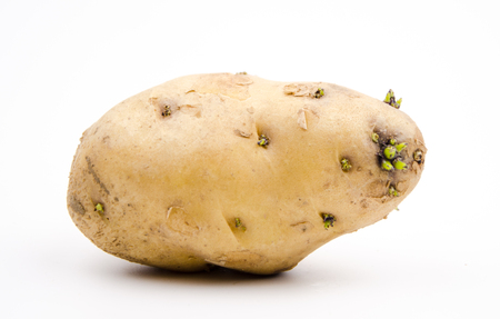 toxin: Meaning sprouting potatoes toxic