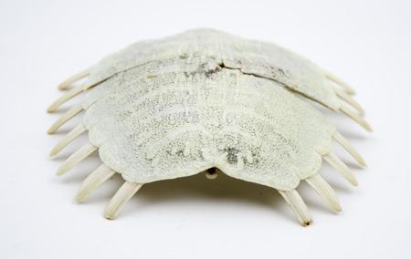 shell fish: Shell fish Stock Photo