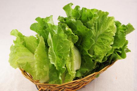 romaine lettuce: Romaine Lettuce