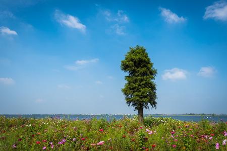 A cypress among flowers